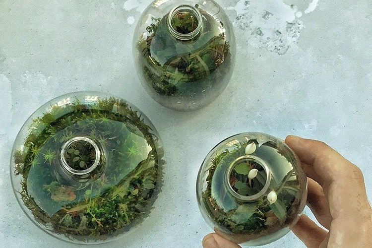 Three of James's tiny terrariums, made out of glass jars from  Arket . Photograph: James Wong.