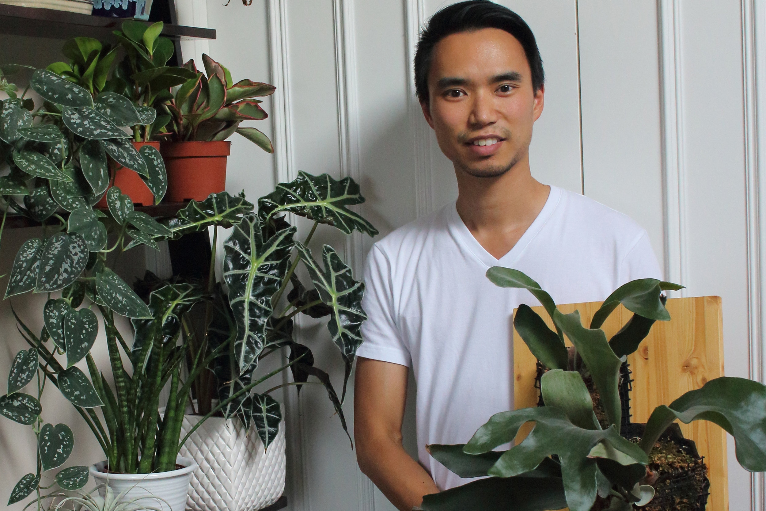 Photograph: House Plant Journal/Darryl Cheng.