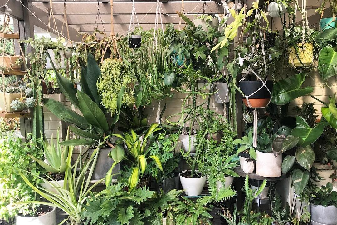 Foliage fun: just some of the plants on Scott's balcony. Photograph: Scott Cain