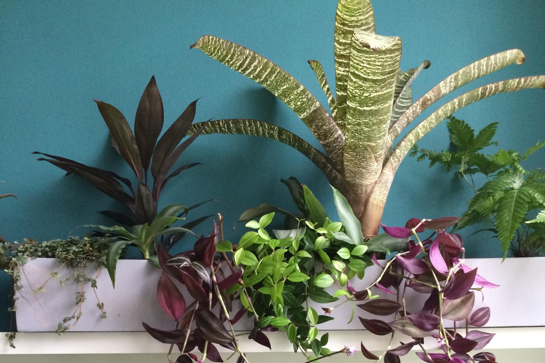 Rob Stacewicz believes most houseplants far better planted en masse. Photograph: Jane Perrone.