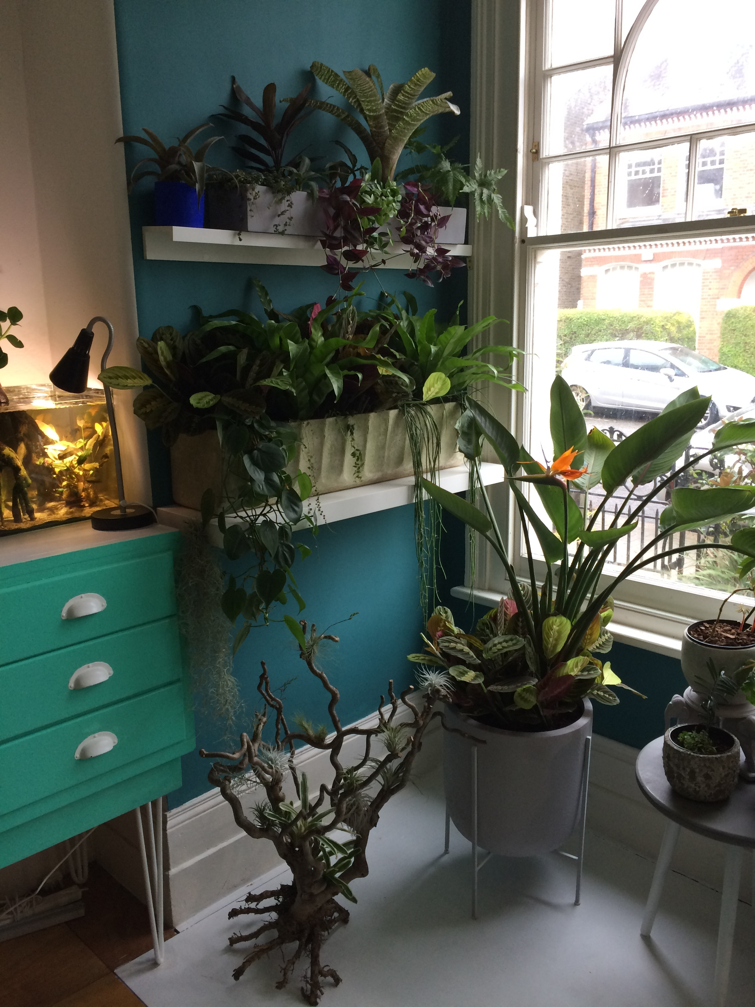 Rob's plant-packed lounge