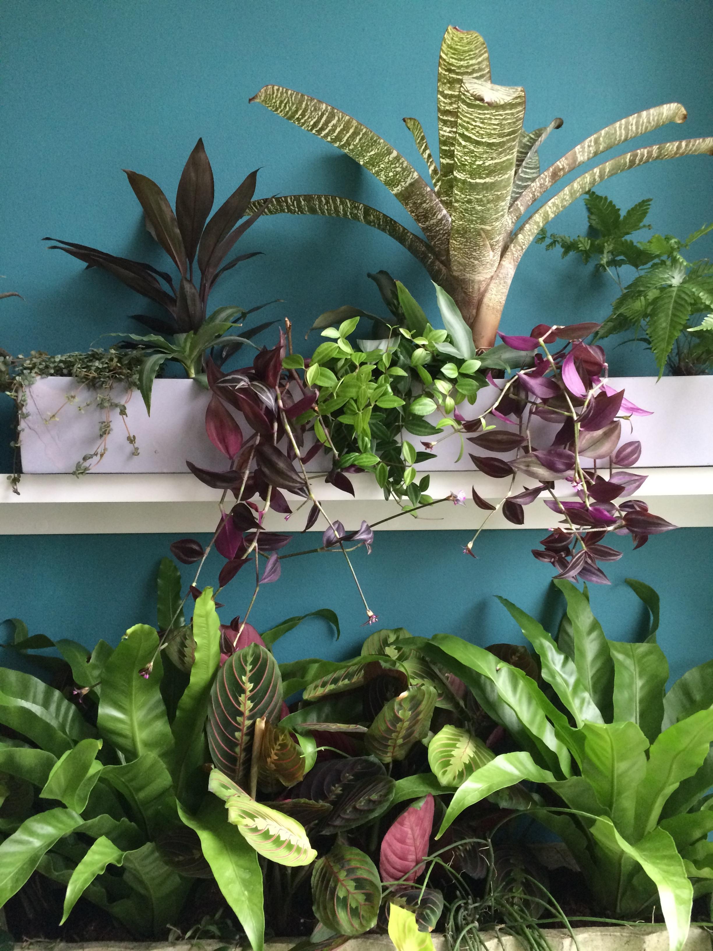 Marantas and ferns on the shelves