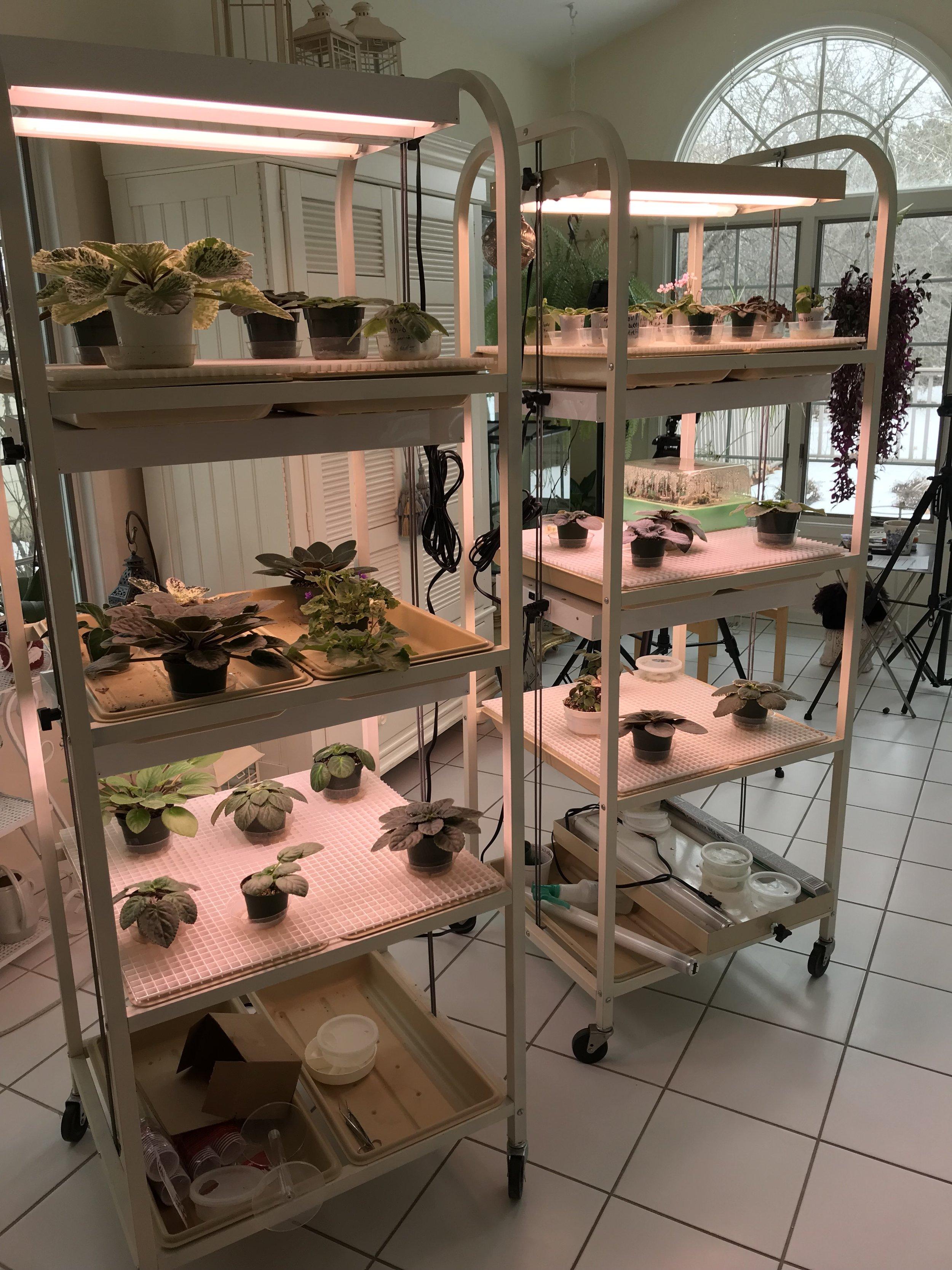 Annie Rieck's AV light carts. Photograph: Annie Rieck.