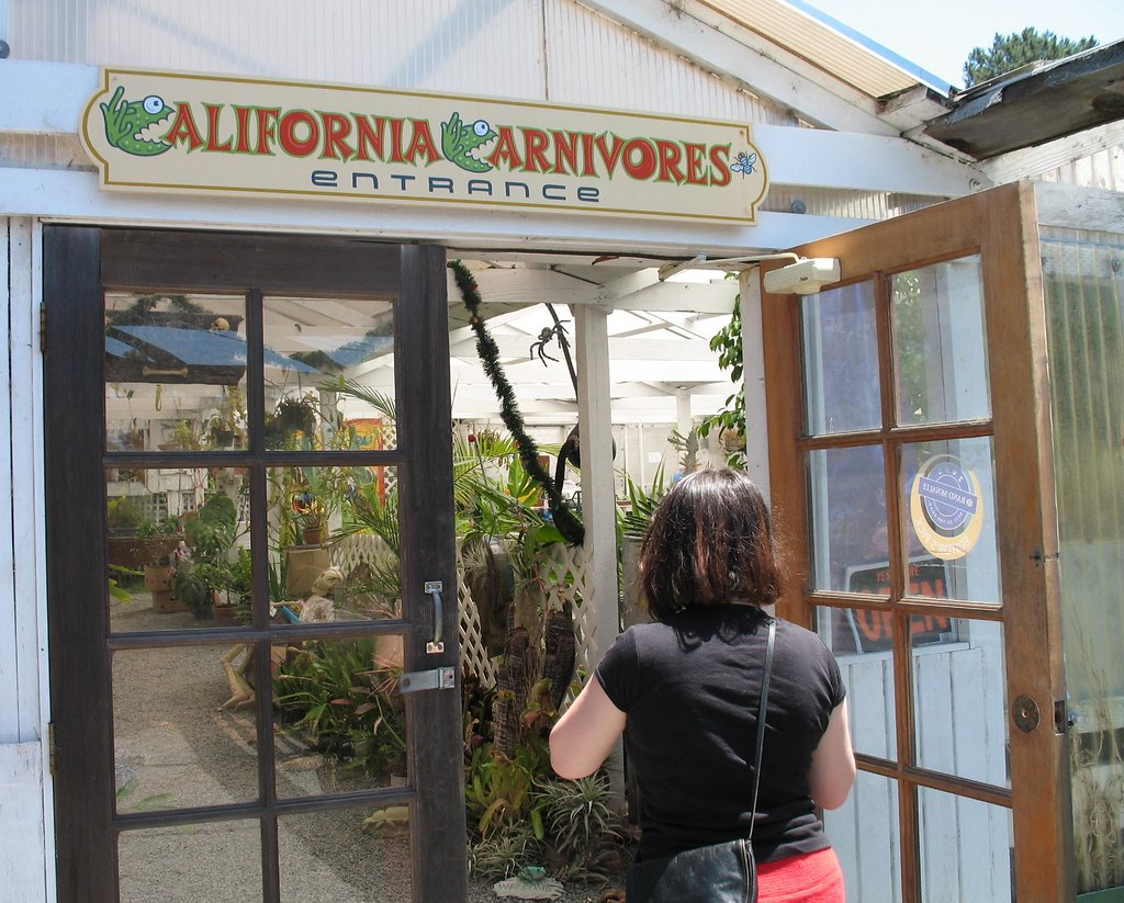 Come on in… California Carnivores nursery. Photograph:  Orin Zebest  on  Flickr .