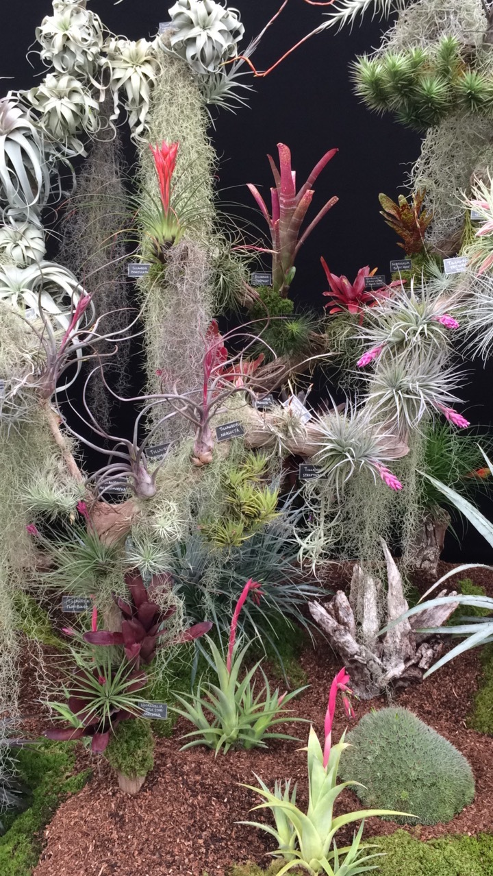 Tillandsias on display on the Andy's Air Plants display