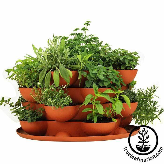 True Leaf Market's  stackable planter plus culinary herb kit