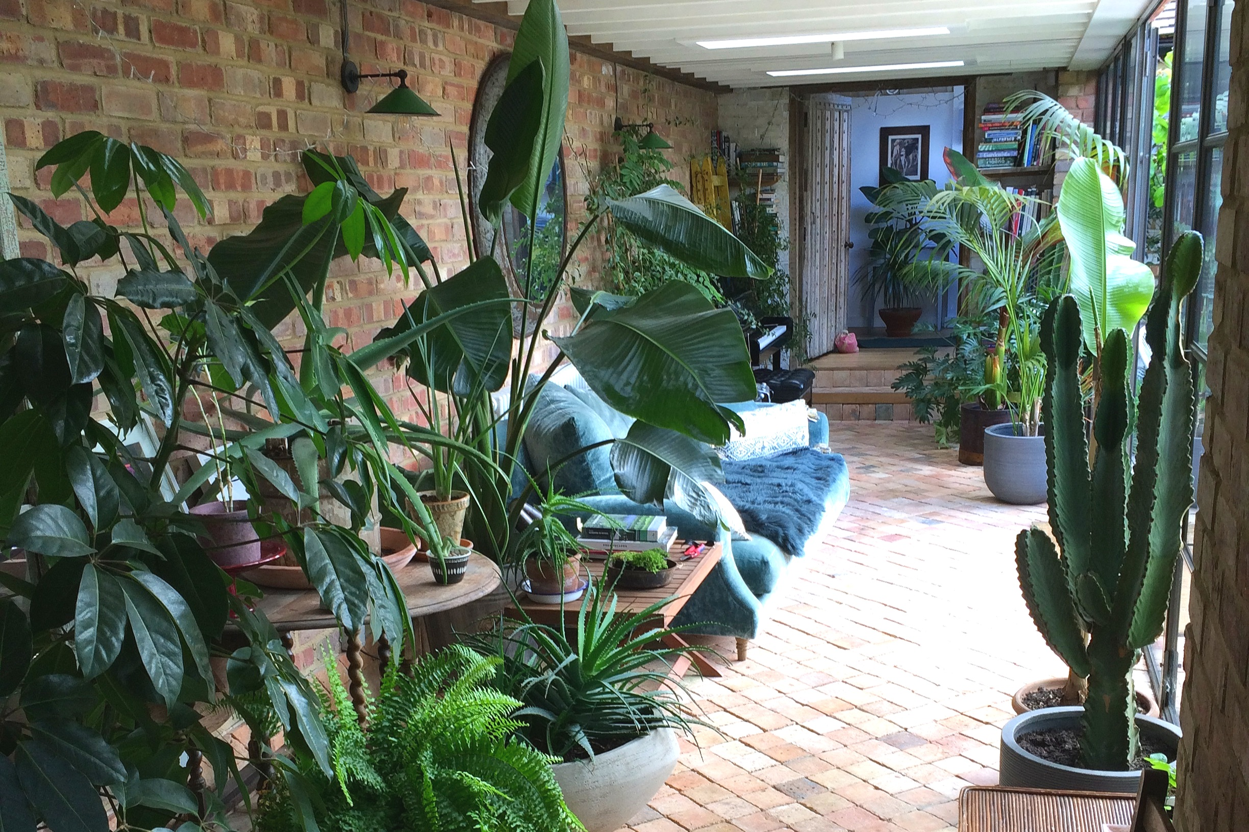 Martha Krempel's plant filled extension. Photograph: Jane Perrone