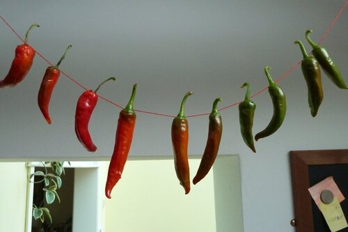 A chilli ristra. Photograph: Jane Perrone.