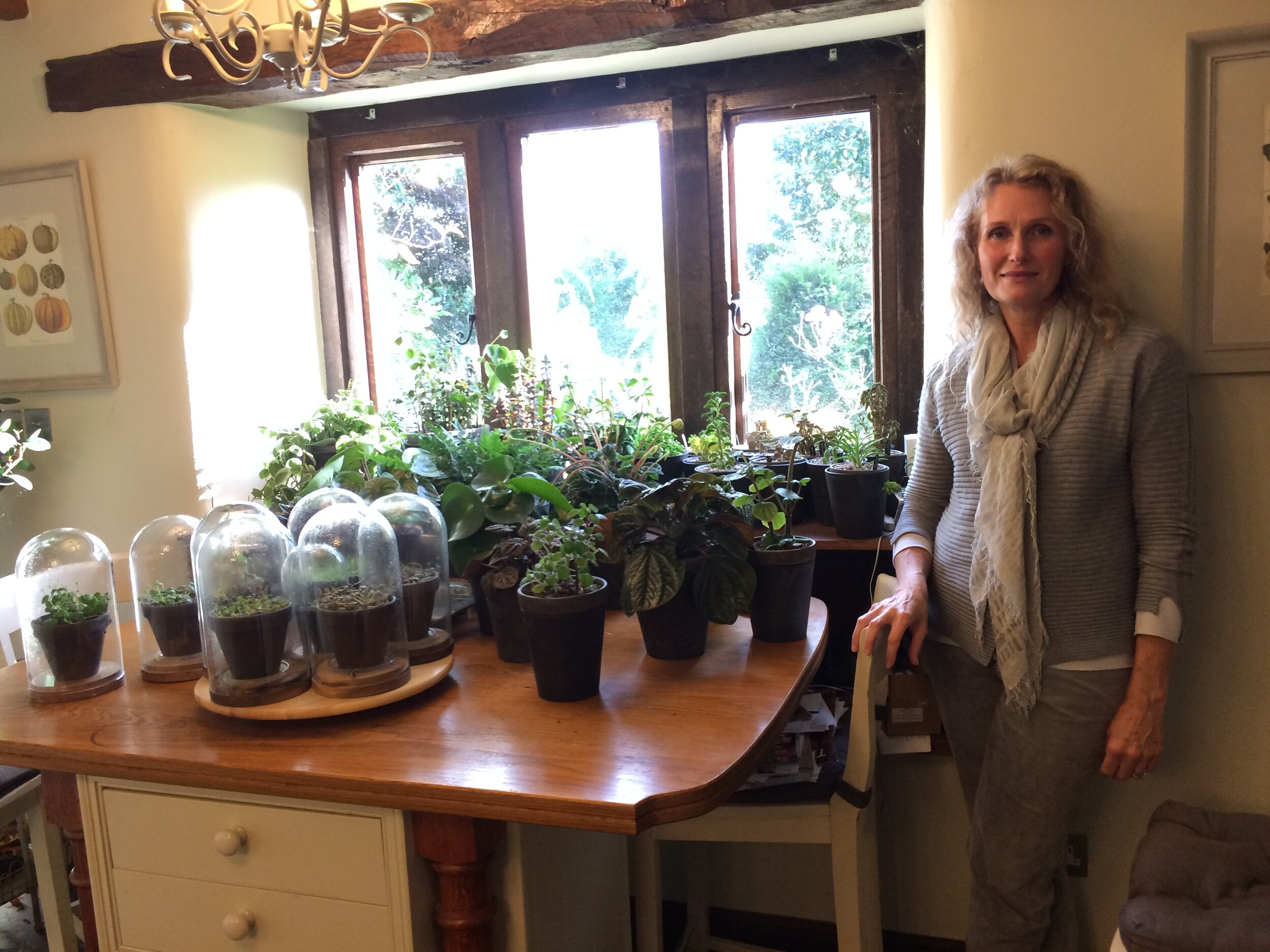 Sally with some of her peperomia collection in her kitchen. Photograph: Jane Perrone.