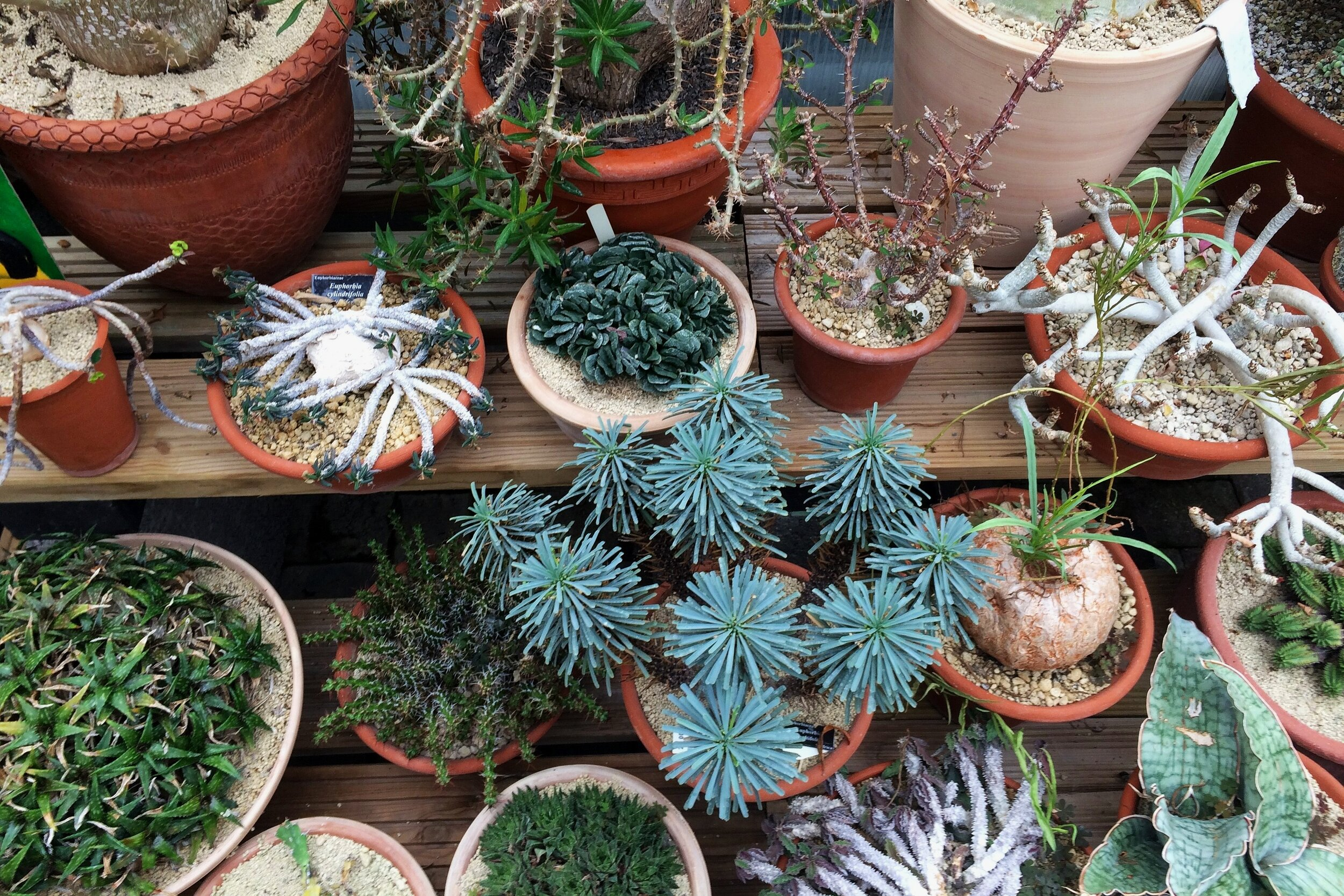 Episode 117 Euphorbias And Other Succulents With Bob Potter