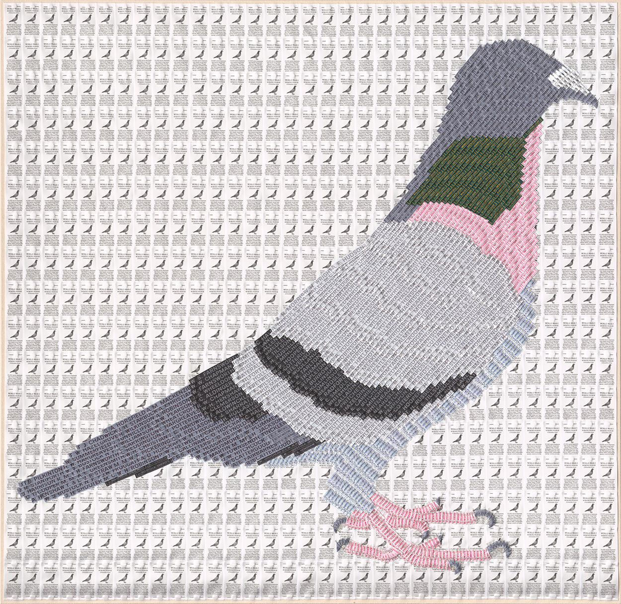 Joy Pitts 2015 Homing pigeon .jpg