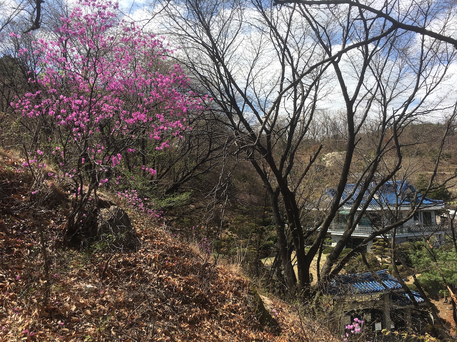 Sakura (Cherry Blossoms) and a palace I spotted on my way up the mountain.