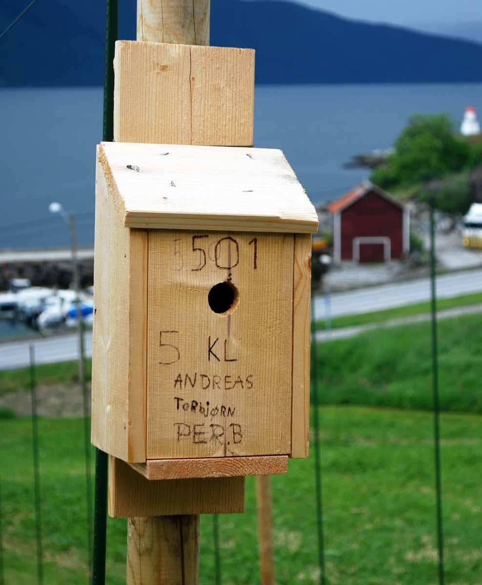 Blåmeis er rekna for å vera svært effektive insektetarar.