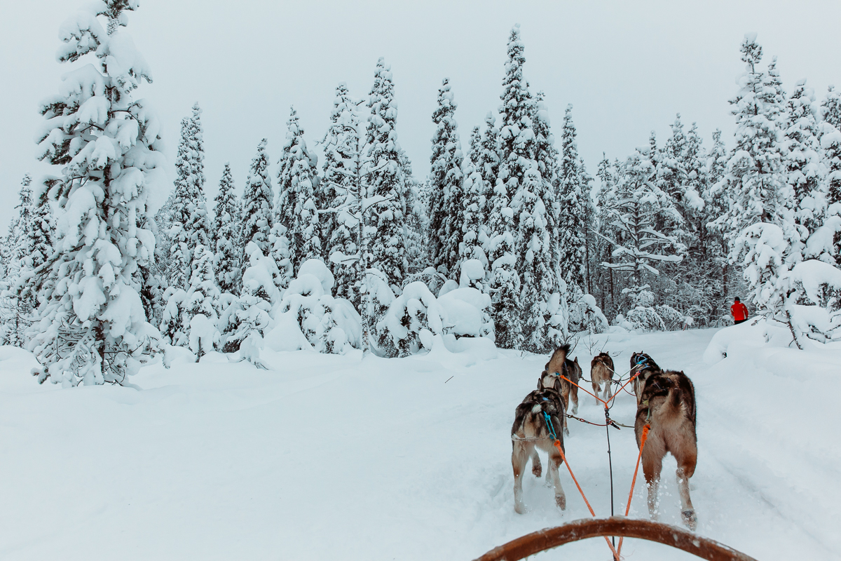 Tundra Huskies Finland Bronwyn Townsend