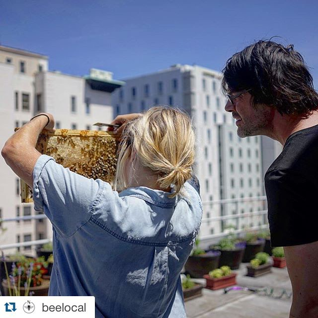 #Repost from @beelocal  ・・・  Beekeeper @katefranzman and Vess helping out with a hive inspection on top of @hotel_lucia. It's always a pleasure to work with other like-minded beeks. #oregon #portland #indiana #indianapolis #apiculture #beekeeping #pdx #urbanbees #rooftopbees (at Hotel Lucia)