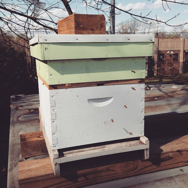 Happy Earth Day! Here's a shot from yesterday of the bees in their new home on my farm. It's nice to have the two together at last.  (at Chase Near Eastside Legacy Center)