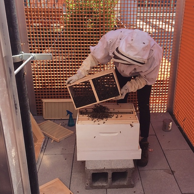 Bee Public installed a package of bees on the roof at Eskenazi Health today, too. So excited to have pollinators at the Sky Farm!  (at Eskenazi Health)