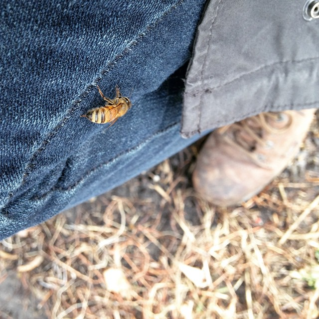 Getting pooped on. #beekeeping #beepublic (at Chase Near Eastside Legacy Center)