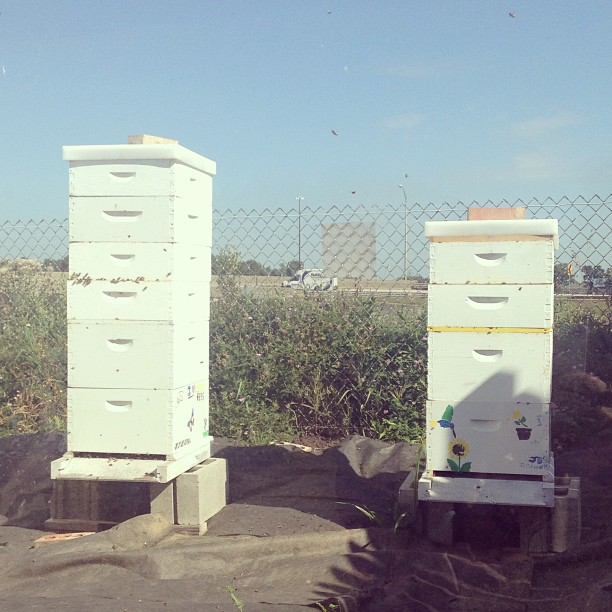 Working at Indy Urban Acres today. Had to scope out the hives. (at Indy Urban Acres)