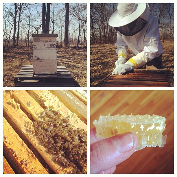 How to keep bees in four easy steps.