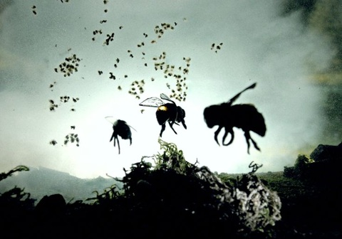 """Vanishing of the Bees"" 
