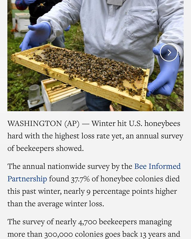 Feel like you're not seeing many bees around this year? Here's a little glimpse into why. It's easy for commercial beekeepers to track their bees but we can be sure native pollinators are having a tough time, too.