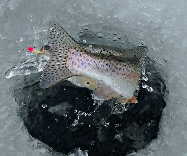 This pic was taken on today's date a few years ago. Fishing metro area ice on a body of water that's already wide open this year! No fancy camera just an iPhone. Create with what you have now don't sit on the sidelines waiting for what you think you need. #fishing #icefishing #colorado #trout #troutfishing #creativecontent #ratso #actionshot #action #creativecontent #marketing #promotion #ericalleephoto #iphone #btfmfishing