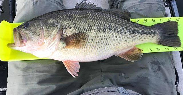 Early Feb in Colorado already laying a few decent bass on the HT! #fishing #🎣 #kayakfishing #vertical #bass #bassfishing #eagleclaw #bassproshops #hobie #hobiefishingteam #luckytacklebox #btfmfishing #colorado #yakattack #ericalleephoto
