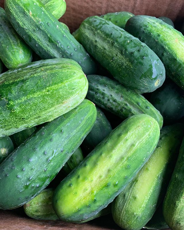 We love working with local farms & using the products on our menu regularly!  Just picked up these 🥒 from @eddyfarm to make more pickles!   📍Lunch Tues-Fri at State House Sq 📍Thurs at @newparkbrewing 📍Fri at @brewery.legitimus 📍Sat & Sun at @hogriverbrewing