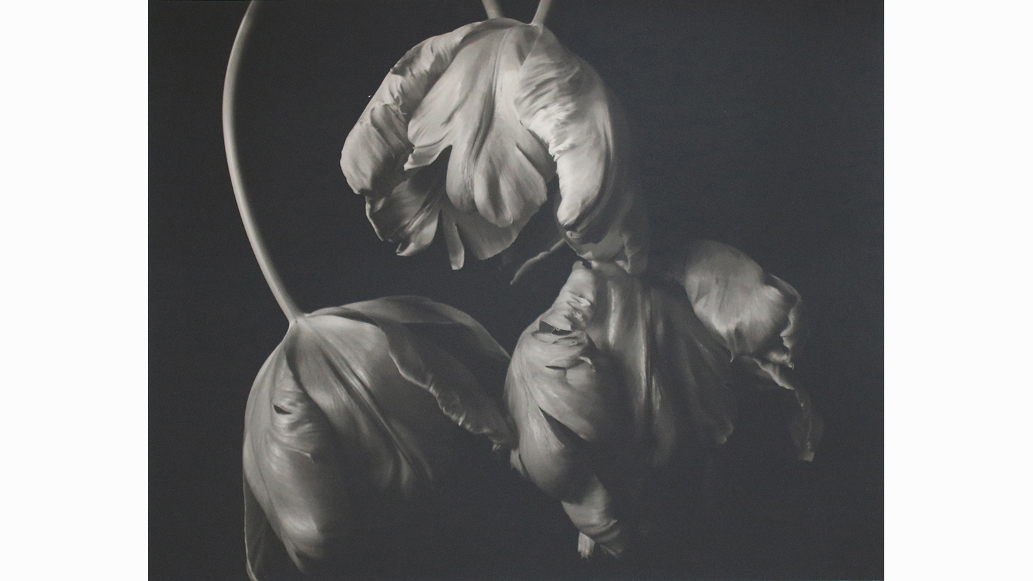 THREE TULIPS, FRAMED £820