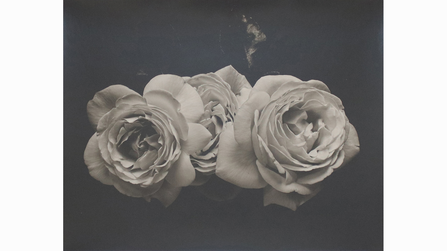 THREE ROSES, UNFRAMED £600