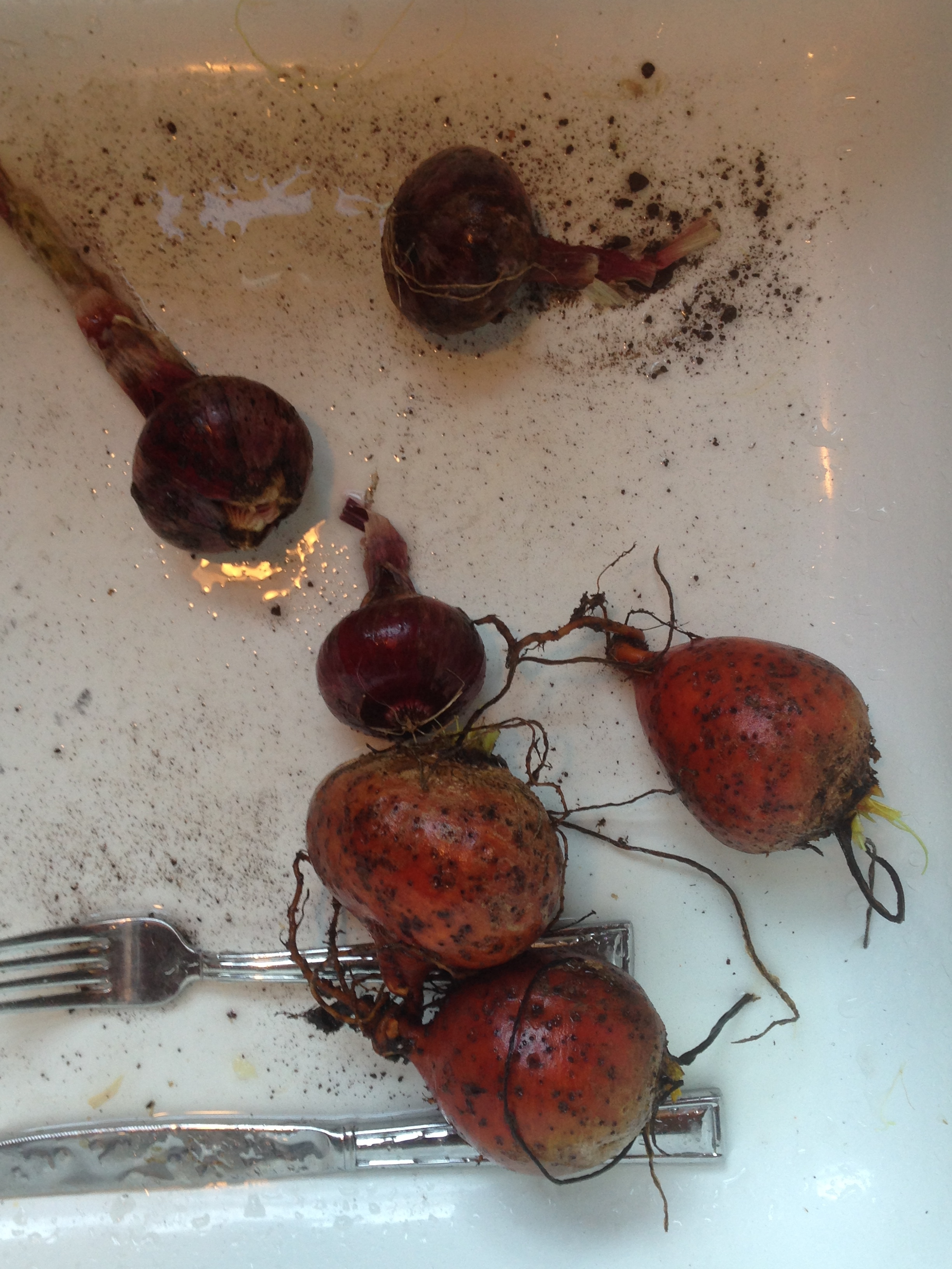 Beets, Before