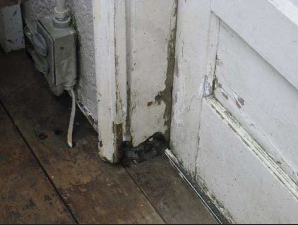 Repair: Dry rot and chipping paint.