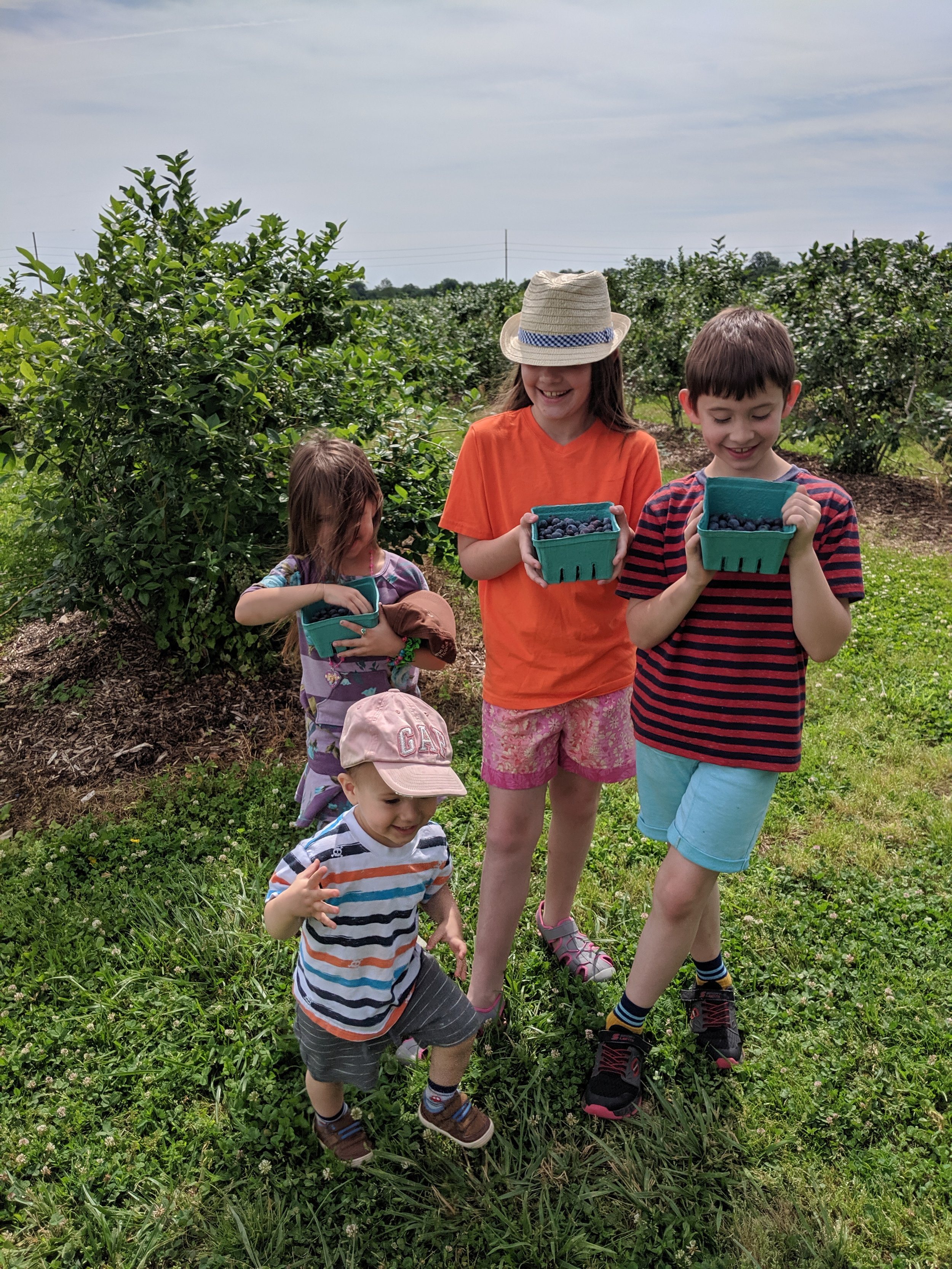 Blueberry picking for Maine.