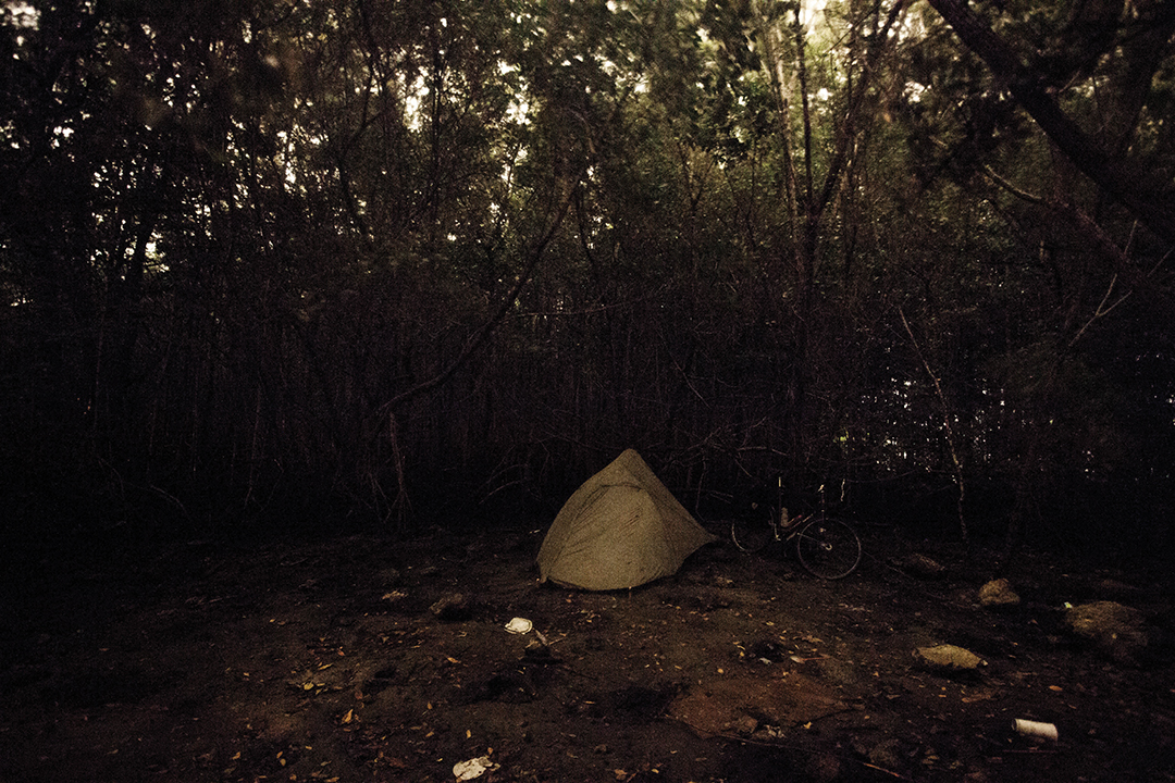Camping in a Mangrove Forest