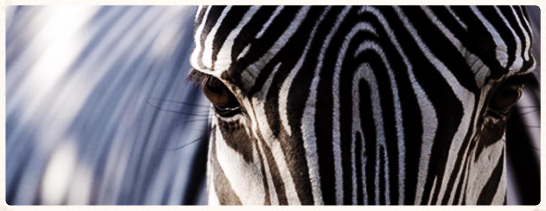 lilongwe-wildlife-centre-header.jpg
