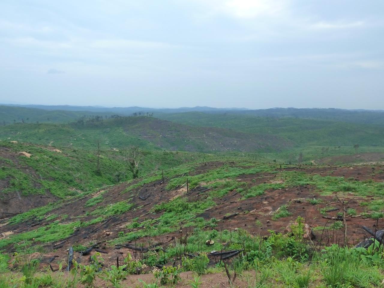 Deforestation 2.jpg