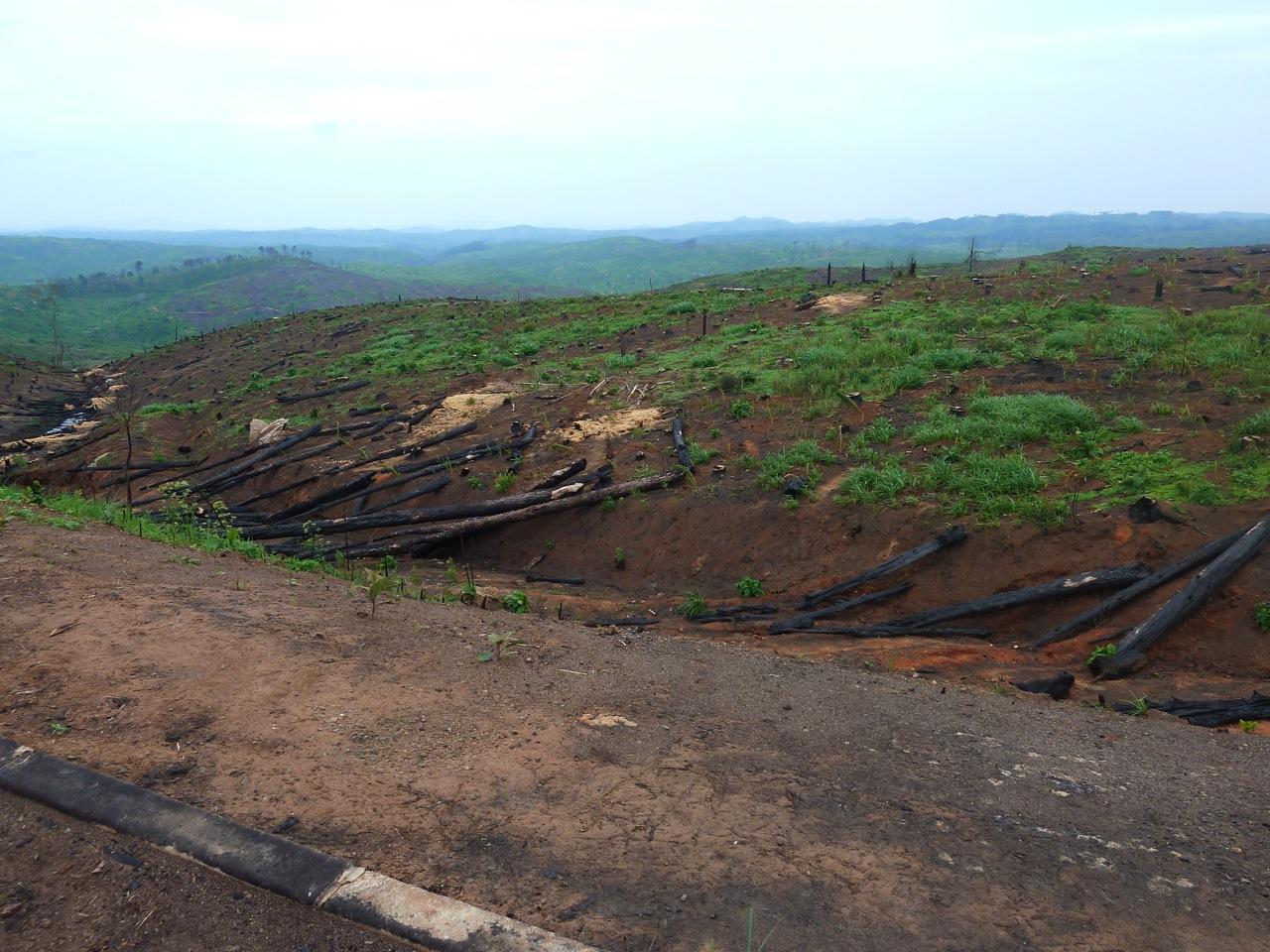 Deforestation 5.jpg