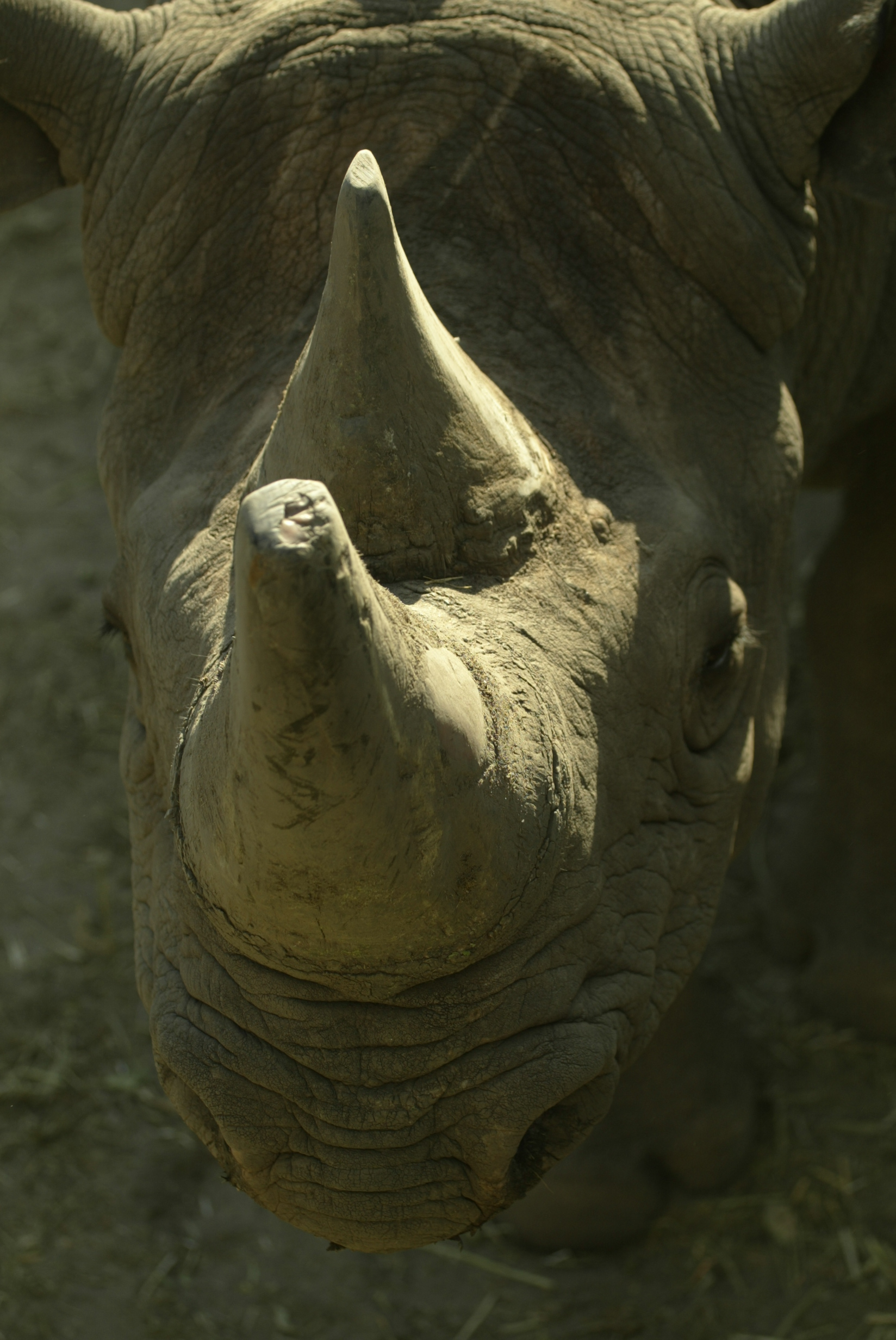 Rhinos_copyright_BJoubert_06.jpg