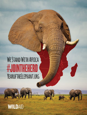Please Donate And Save An Elephant Today.