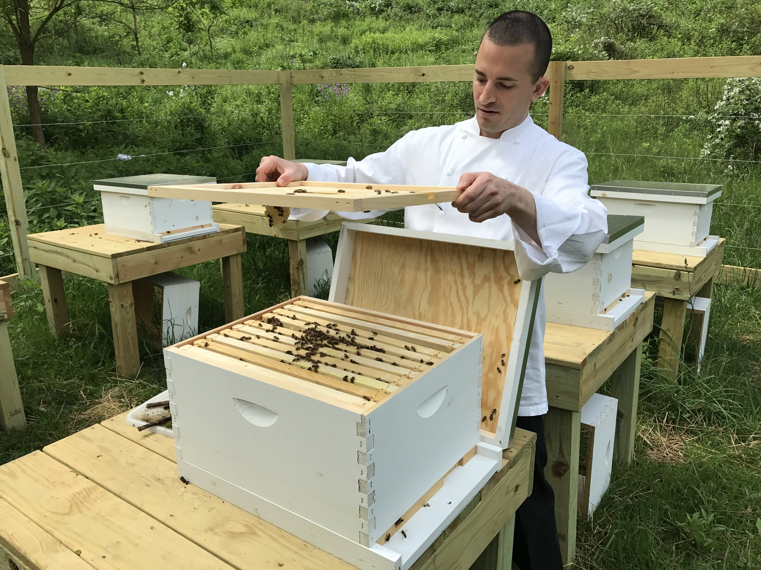 Chef Severin Nunn checks the beehives at The Homestead. (photo credit: Tim Ebner)