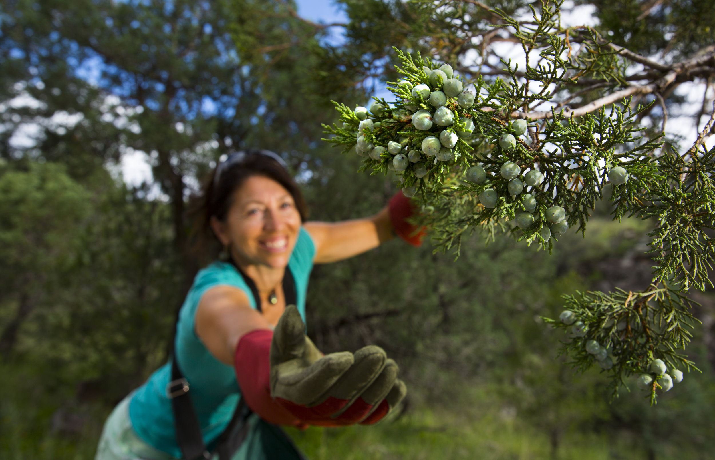 Molly Cummings may be the only juniper forager in Texas who is making commercial gin.