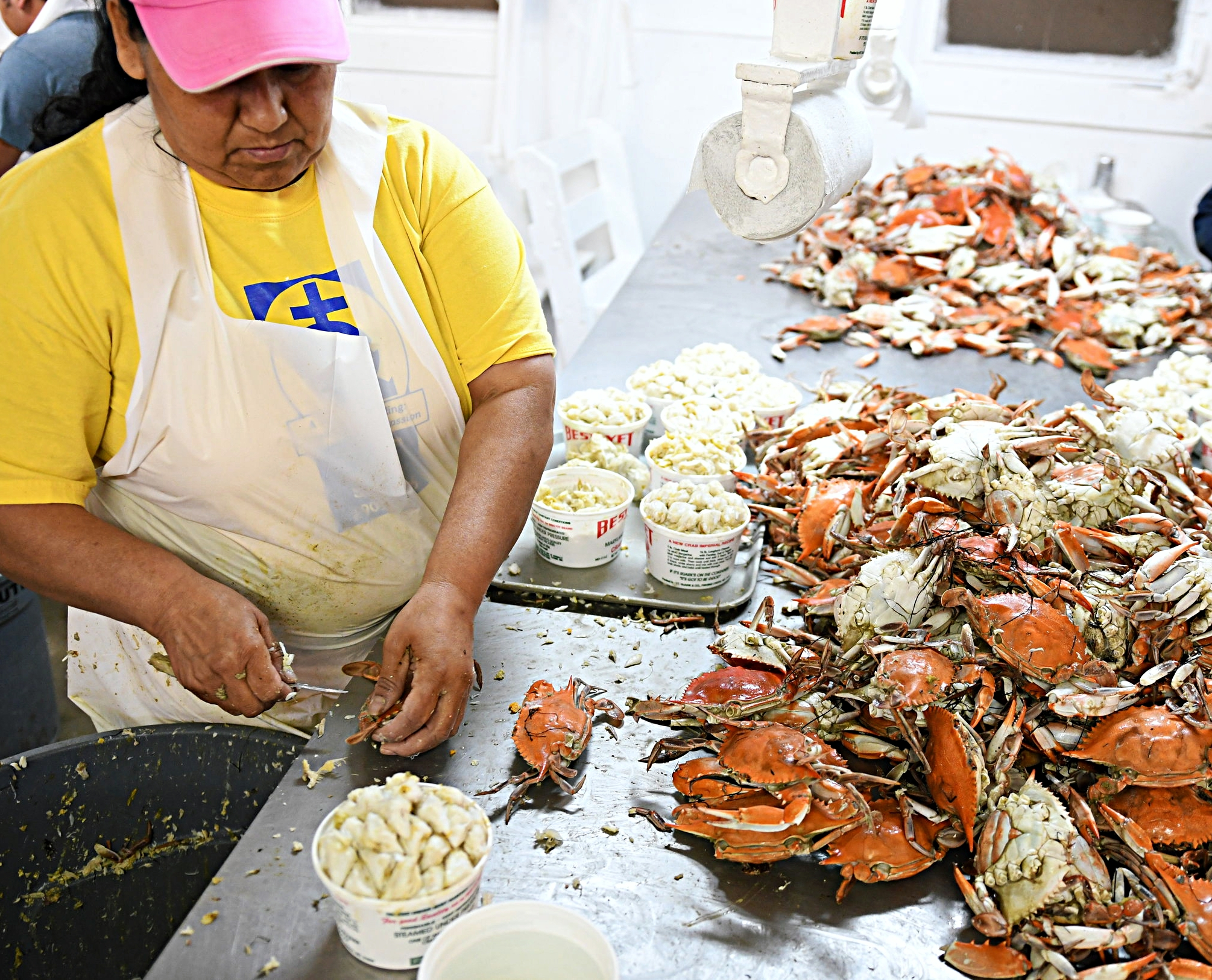 Workers pick crab at W.T. Ruark in Fishing Creek.