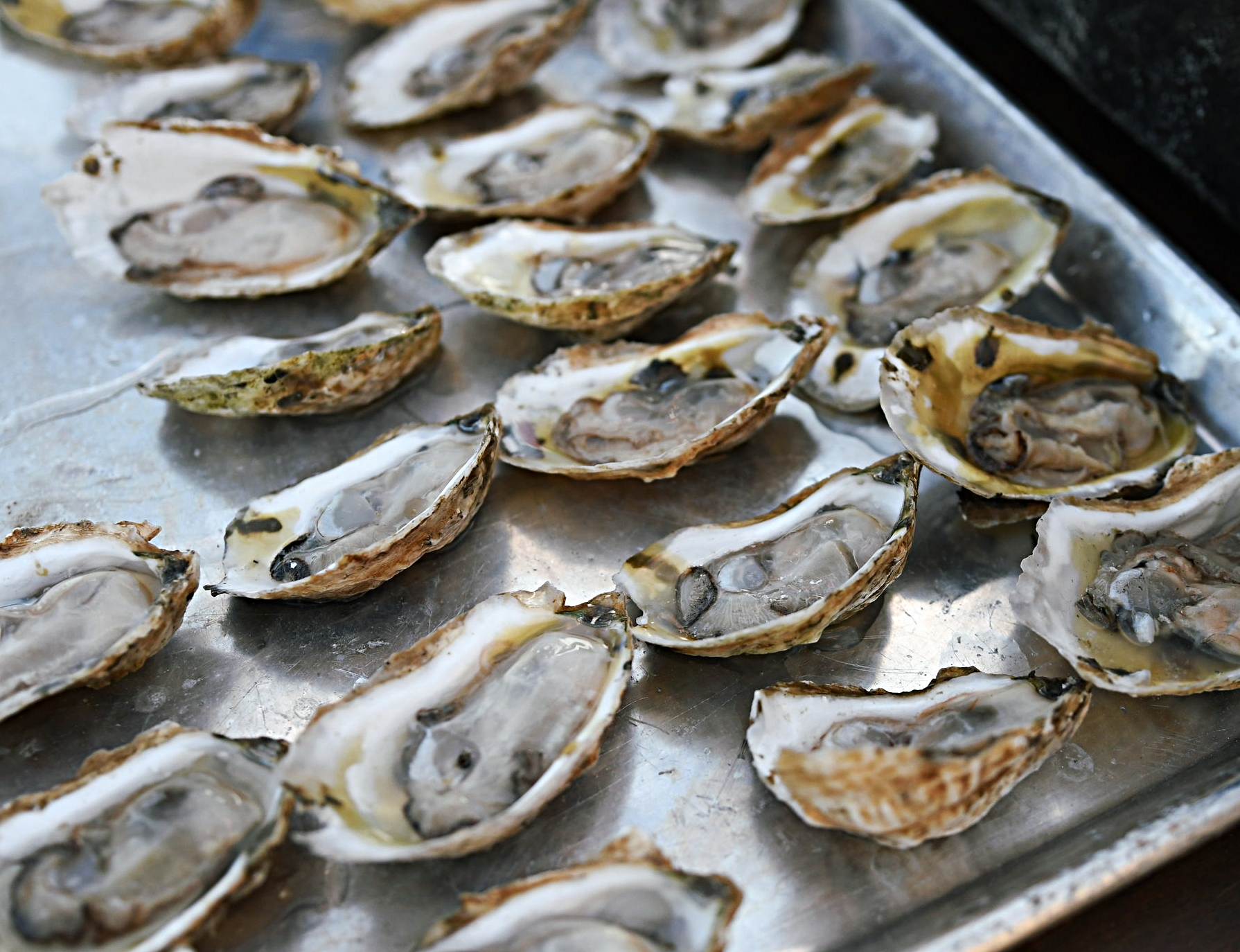Chesapeake Gold oysters from Hoopers Island Oyster Company.