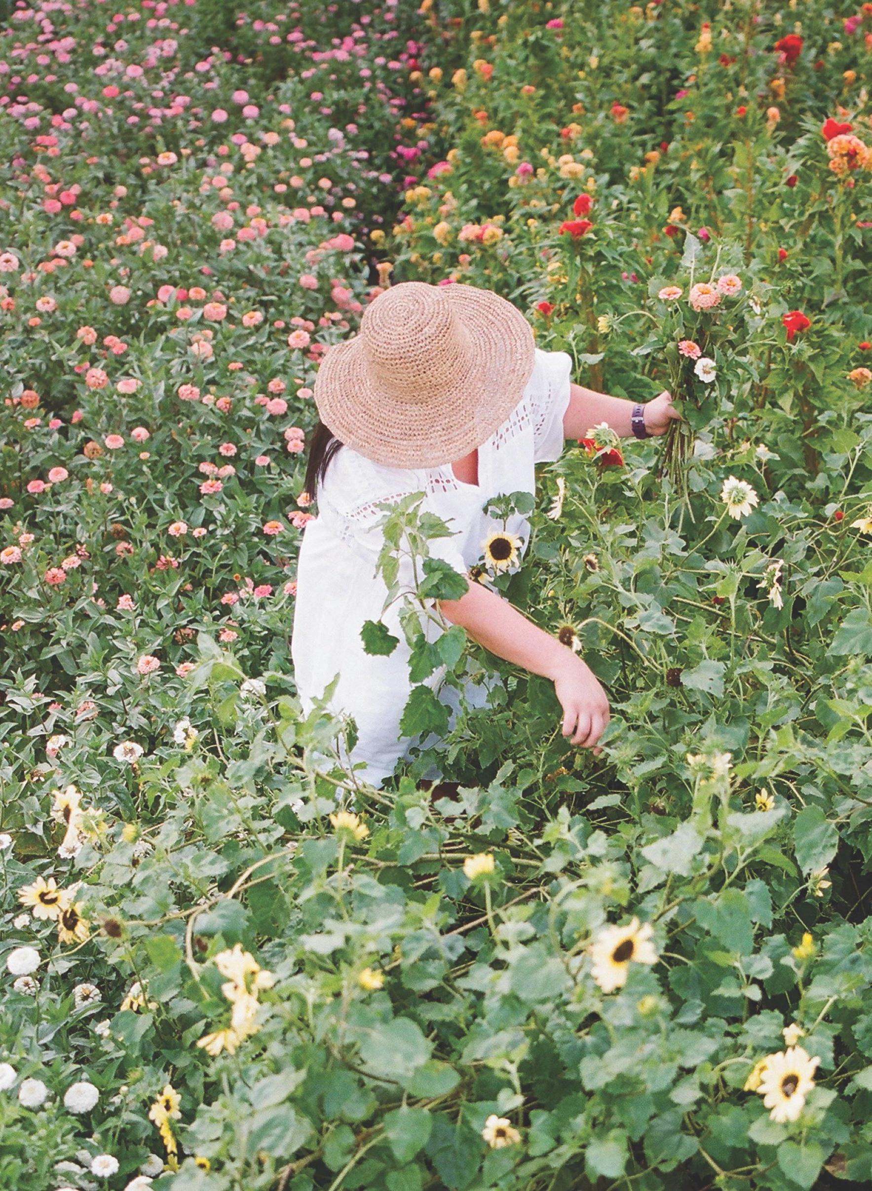 Butterbee Flower farm in Maryland. Photo by Kate Headley.