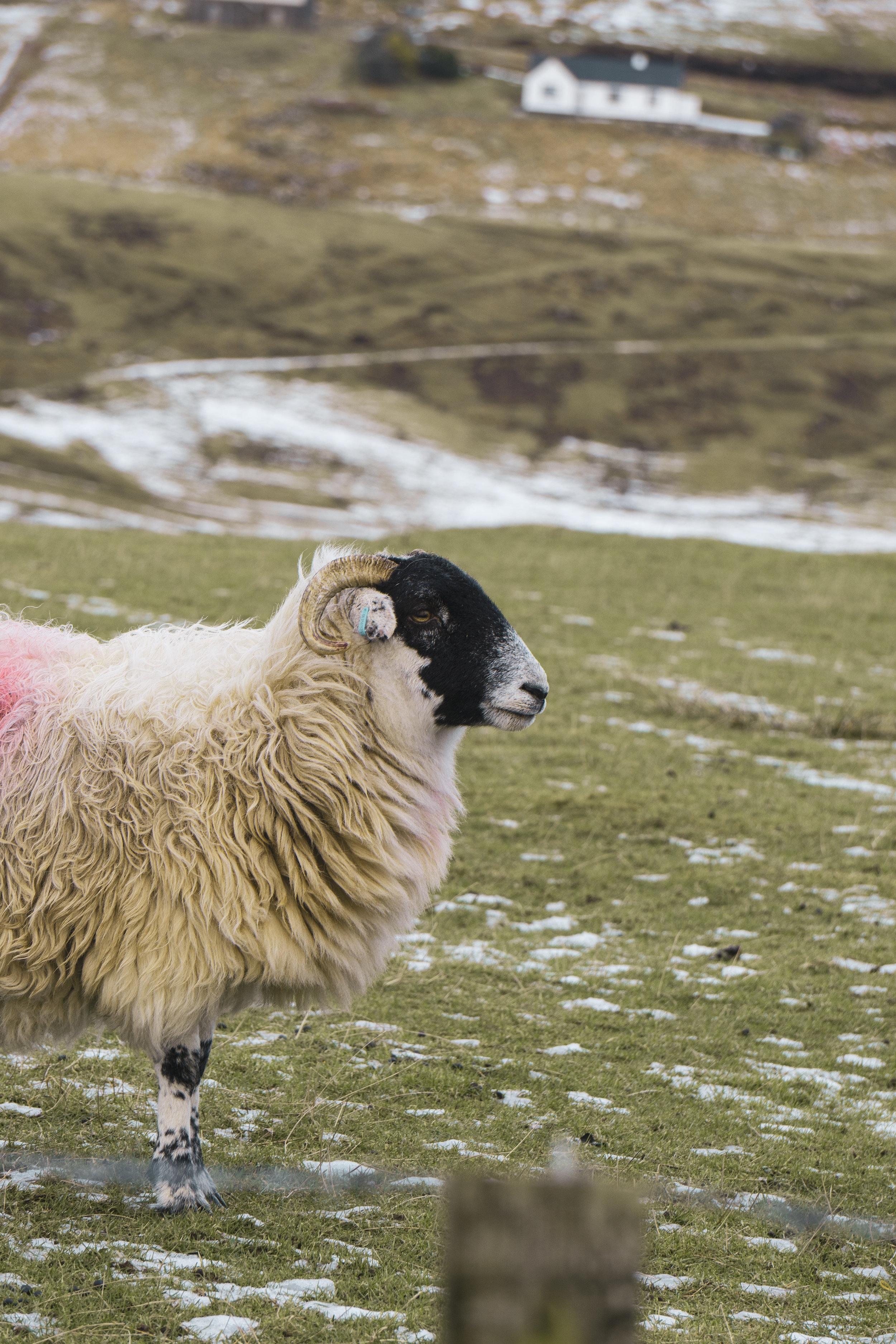 Isle-of-Skye-Fairy-Glen-und-Braes (11).jpg