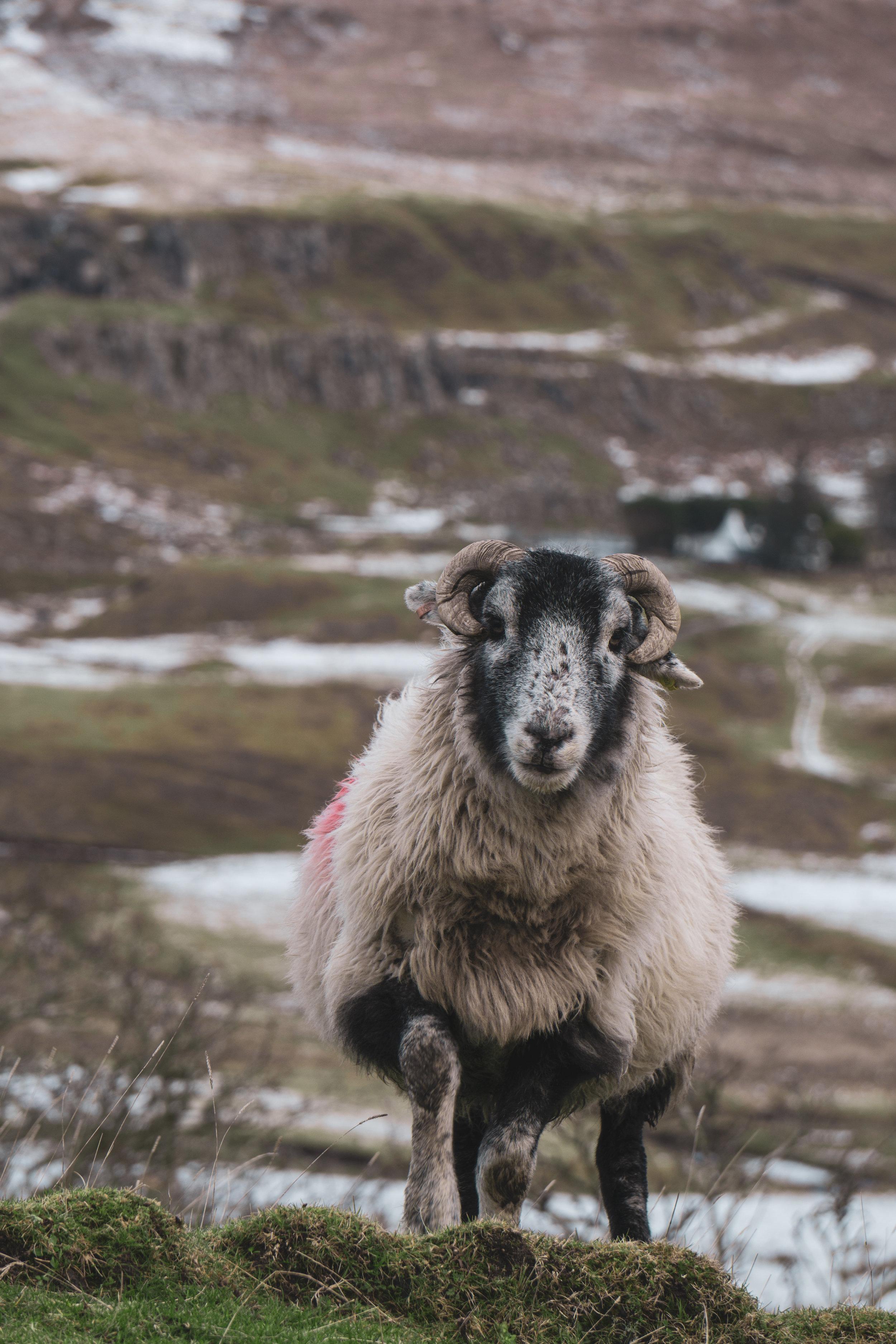 Isle-of-Skye-Fairy-Glen-und-Braes (12).jpg