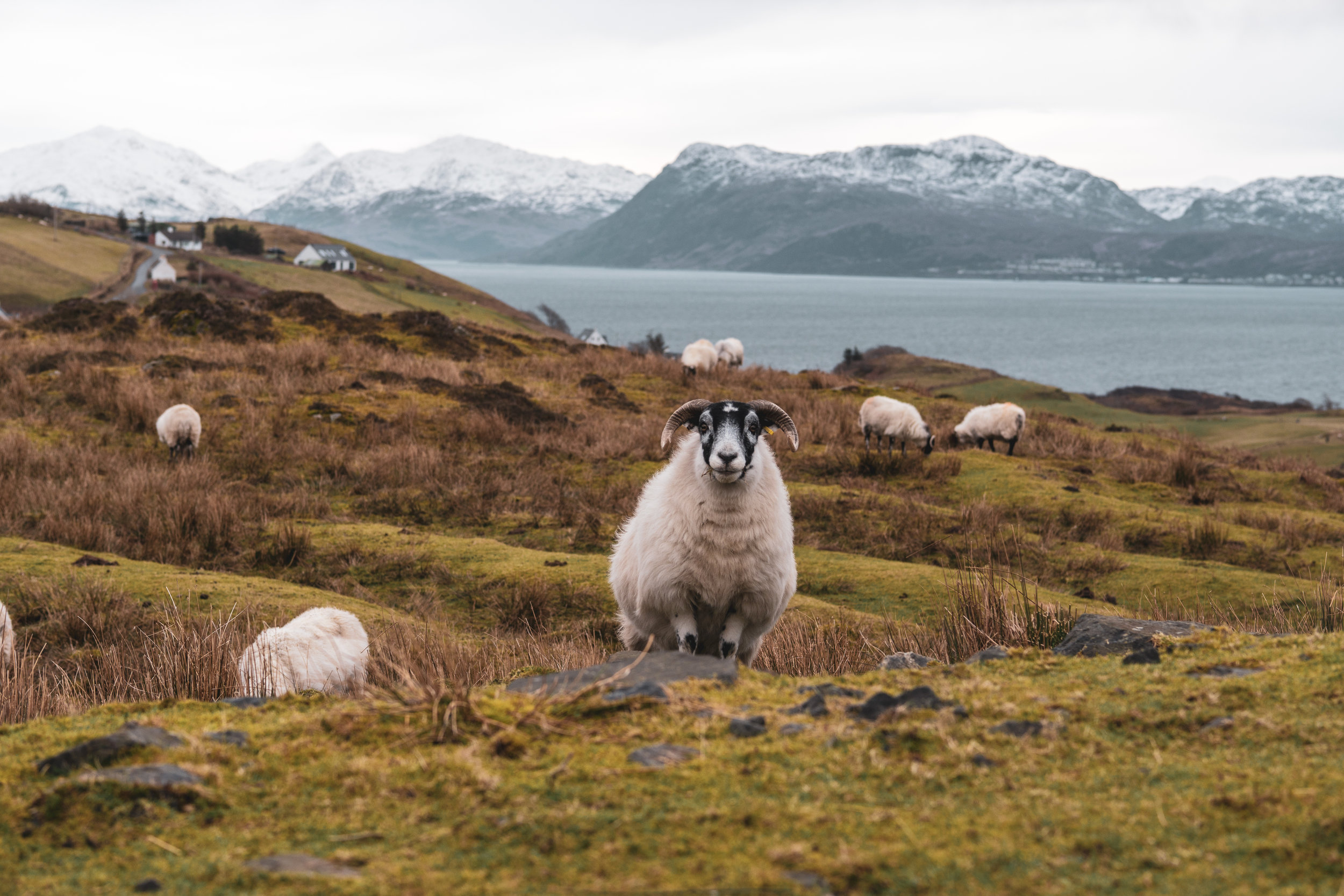 Isle-of-Skye-Point-of-Sleat (2).jpg