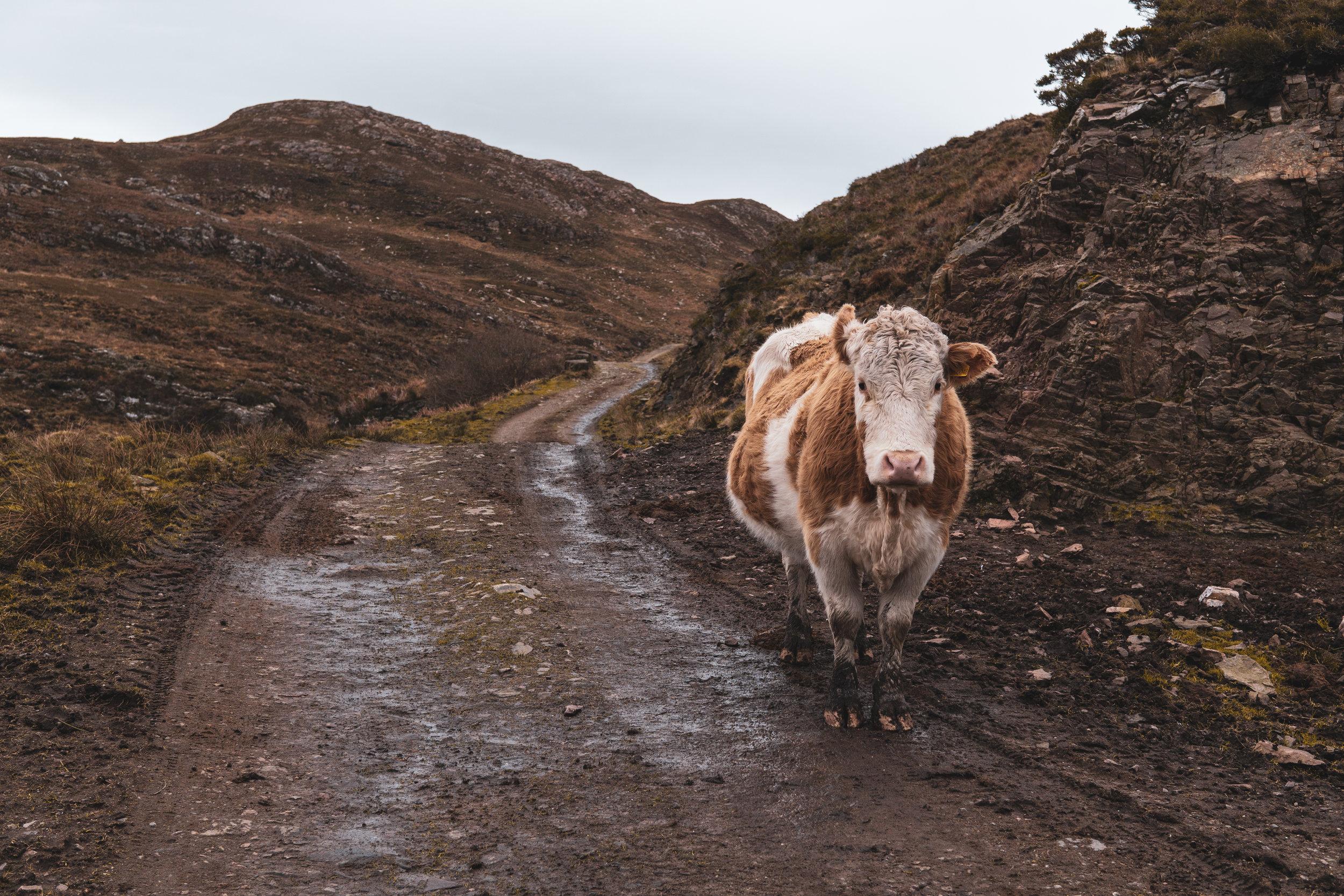 Isle-of-Skye-Point-of-Sleat (5).jpg
