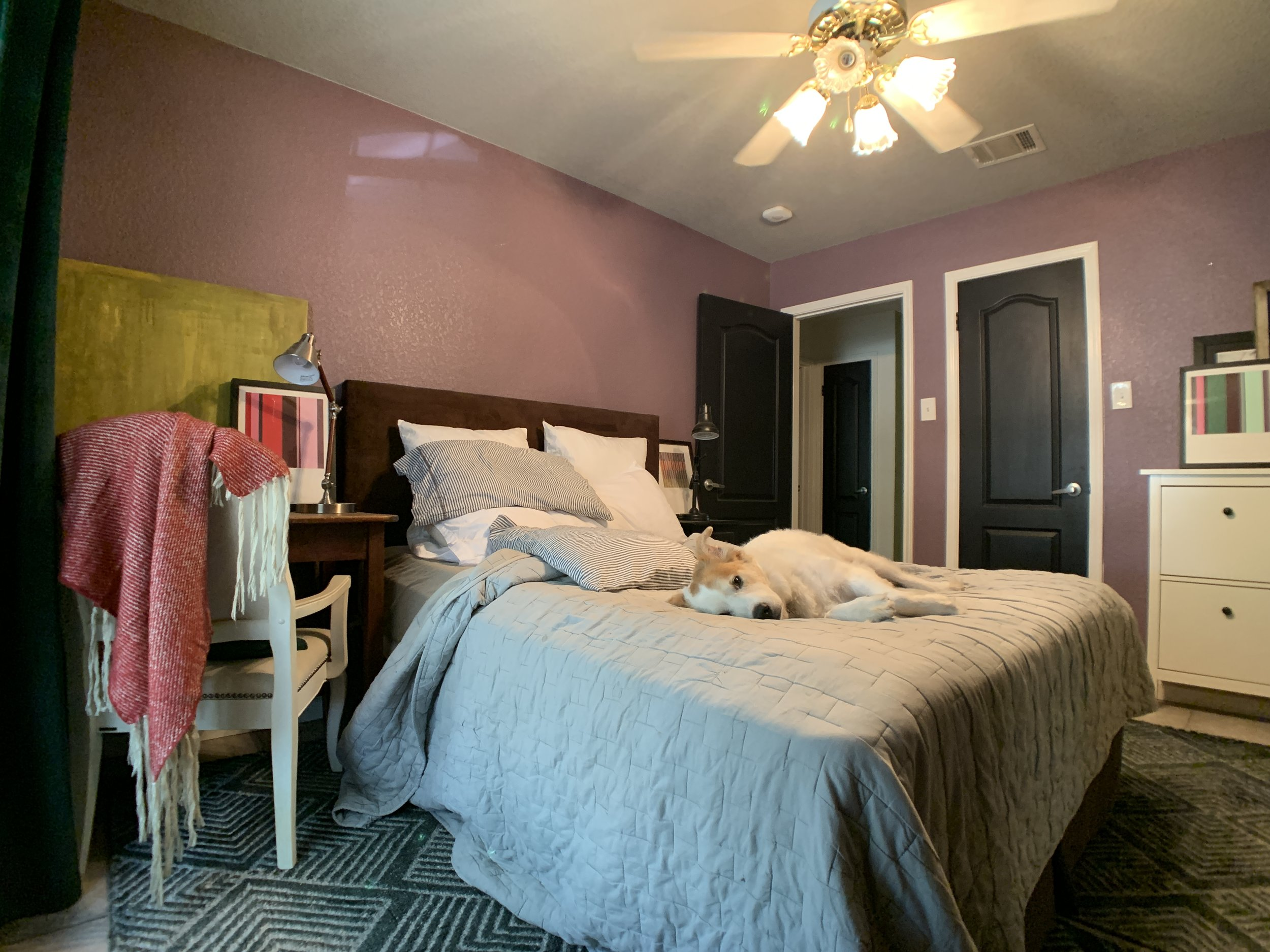 """A forever work in progress, our office/guest bedroom combo is """"the boys' room"""". Here, Maximus gives me the stink eye, as he is often want to do when I have a camera out."""